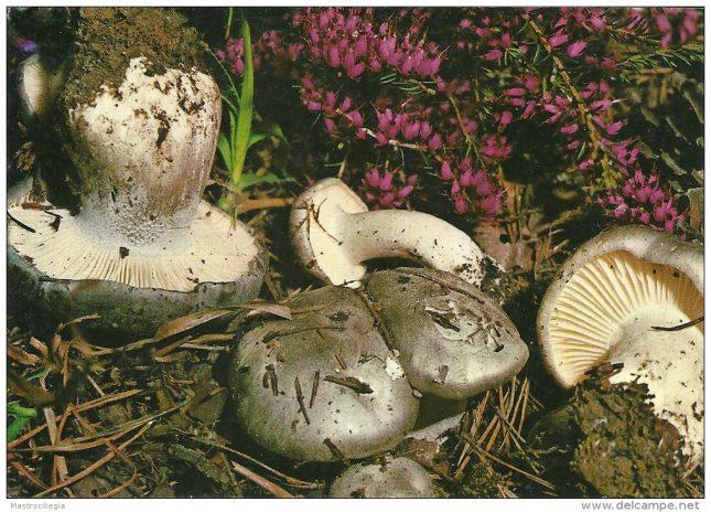 Origine e Storia del Gruppo Micologico Monselice