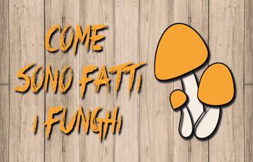 Come Sono Fatti i Funghi