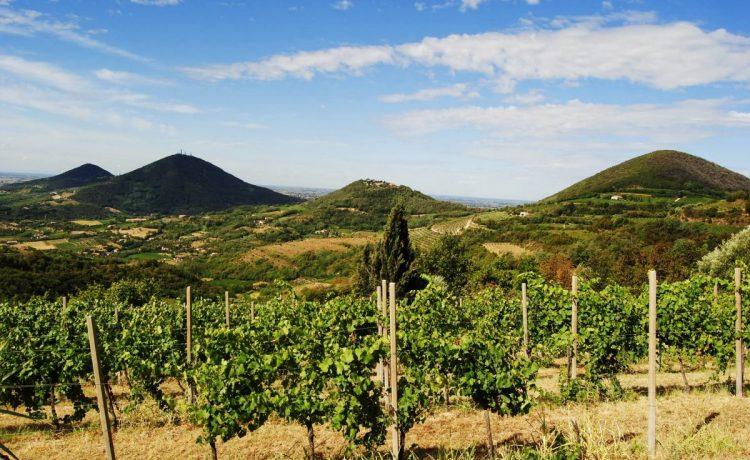 Storia e Curiosità dei Vini dei Colli Euganei