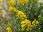 Flora Euganea: la Ruta Padovana