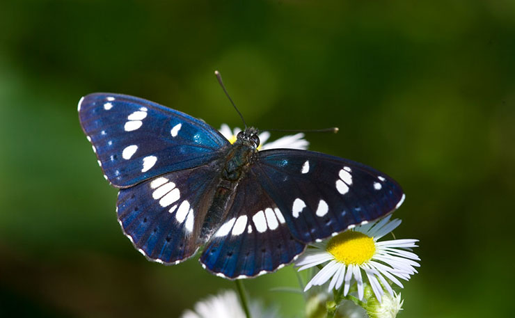Fragili Ali di Farfalla