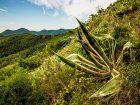 Flora Notevole del Gruppo Monte Ceva