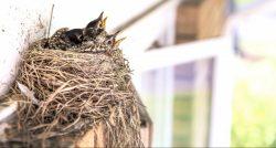 mostra-ornitologica-citta-di-montegrotto-terme-e1470228046603-744x400