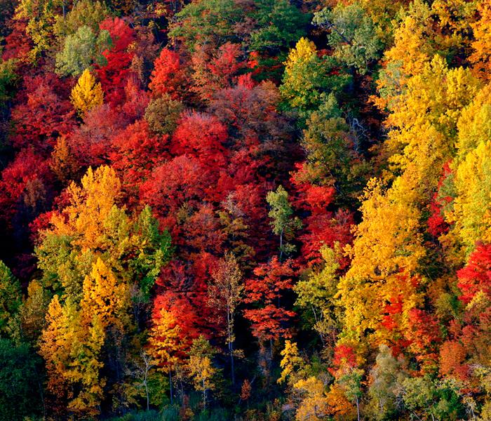 Colori d 39 autunno colli euganei - Immagine dell albero a colori ...