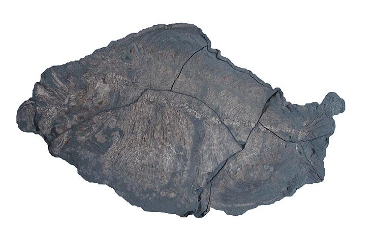 Scienze della Terra: Il Giacimento Fossile di Cava Bomba