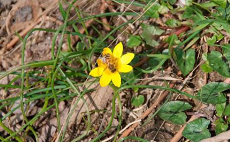 I fiori del sottobosco dei Colli Euganei!