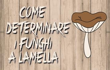 Come Determinare i Funghi a Lamelle
