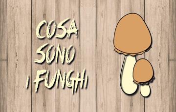 Cosa Sono i Funghi