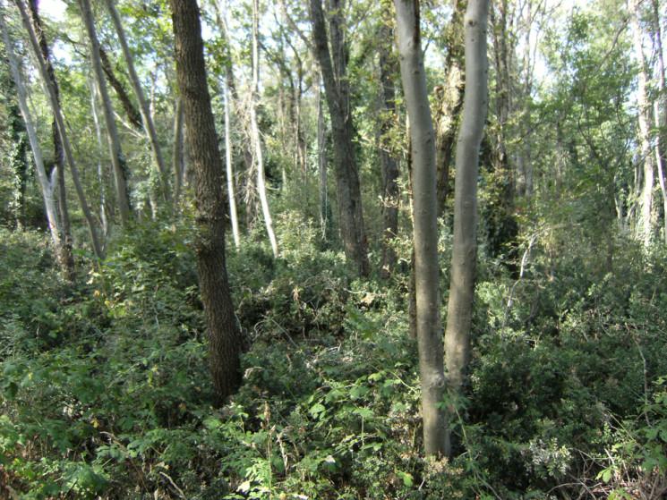 Ambienti Vegetazionali: il Bosco Termofilo