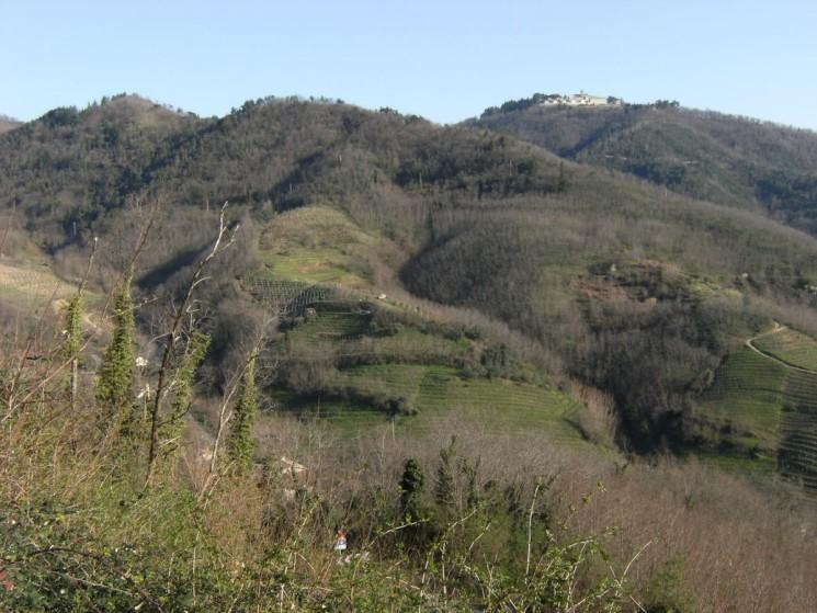Monte Orsara, Tesori Naturalistici