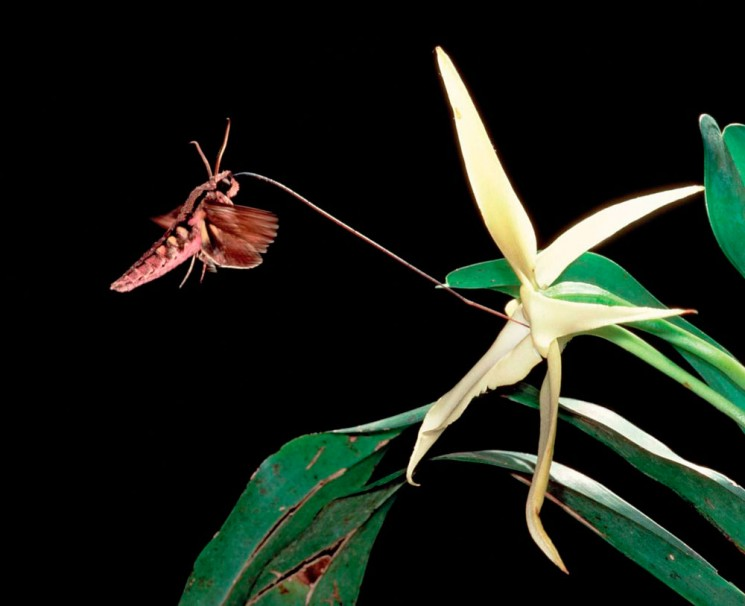 Verdi Passioni, Orchidee l'Impollinazione e le Farfalle