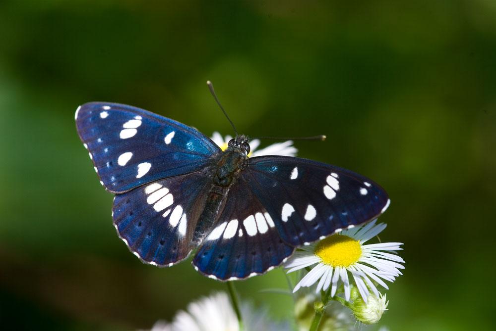Farfalle: Fragili Ali Di Farfalla