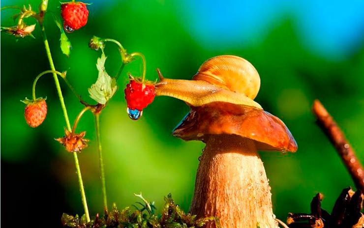Le più Comuni, Errate, Credenze popolari sui funghi Velenosi