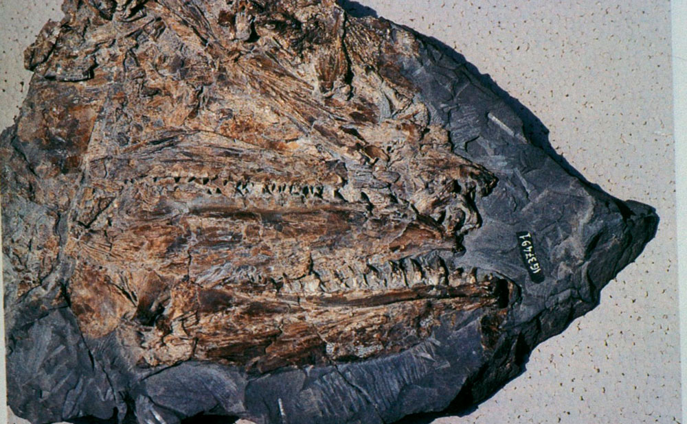 Come gli scienziati possono usare datazione relativa per determinare letà di un fossile