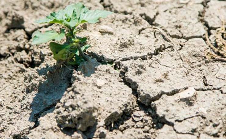 La siccità meteorologica dell'estate 2017 sui Colli Euganei